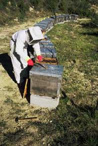 apicultura_2