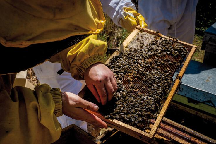 apicultura_750x500_dscf6120_ciprian_gheorghe_albine