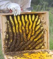 apicultura_solar