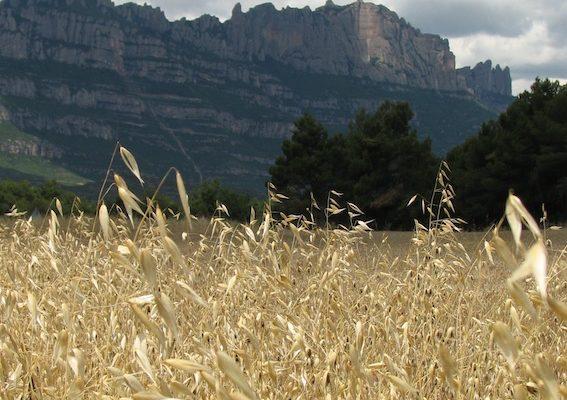 paisatge_seca_baixa