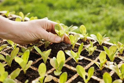 planter_esporus_58_MG_2371autor_pedro_antonio_perez