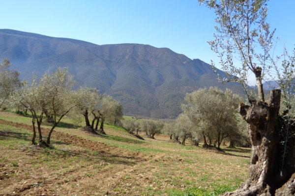 biodiversitat_foto1_Pallars Jussa